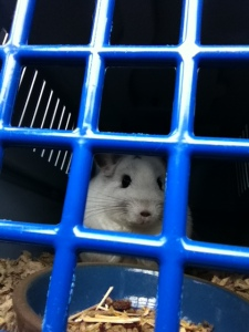 Nim in carrier