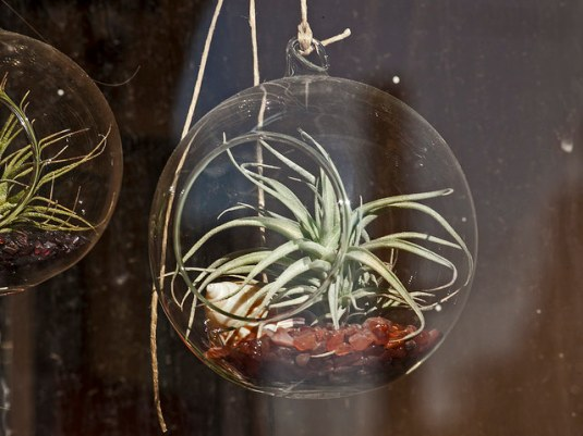 (Air plant apartment decoration, from zeevveez on Flickr.)